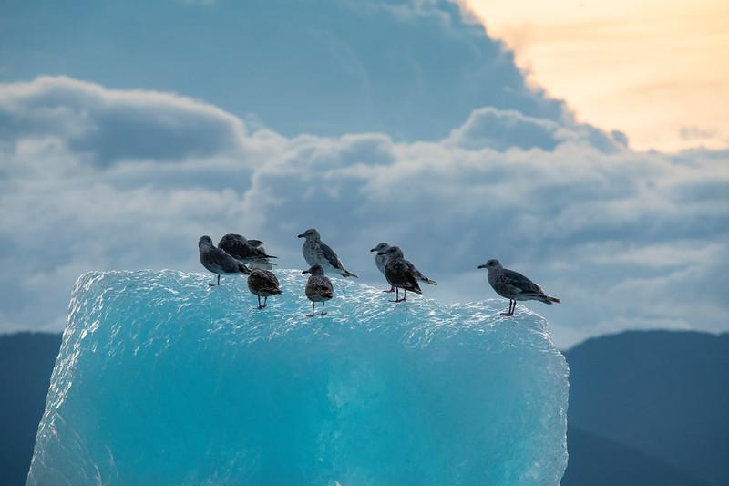 Gulls Silhouetted on Iceberg, Stephens Passage, Alaska