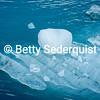 Blue Iceberg, Marjerie Glacier, Glacier Bay