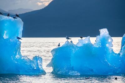 Gulls on Iceberg, Stephens Passage, Alaska