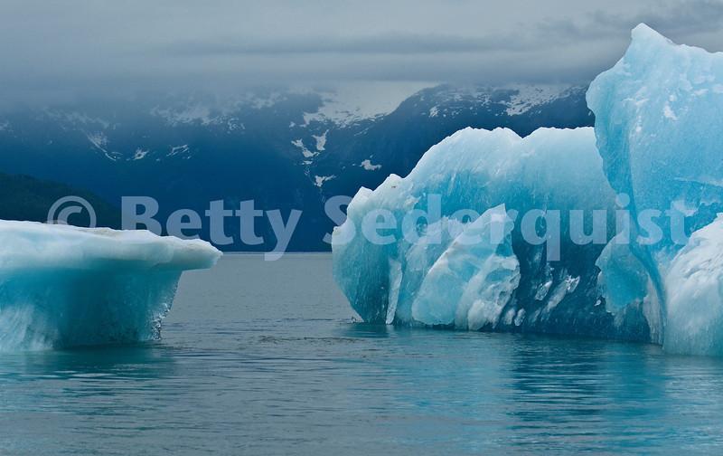 Icebergs, Tracy Arm