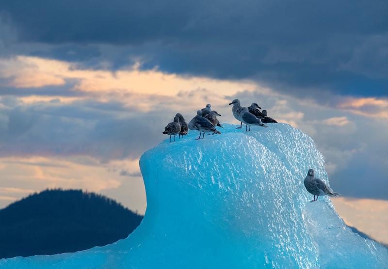 Sunset and Iceberg, Stephens Passage