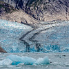 Dawes Glacier and Seals, Endicott Arm