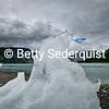 Walrus Shaped Iceberg, Muir Inlet, Glacier Bay