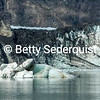 Iceberg and Dirty Terminus of Marjerie Glacier, Glacier Bay