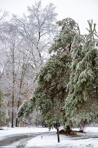 Ice Storm-2737