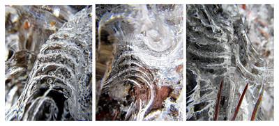 Frozen Collage #4