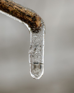 Twig With Icicle