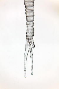 Forked Icicle