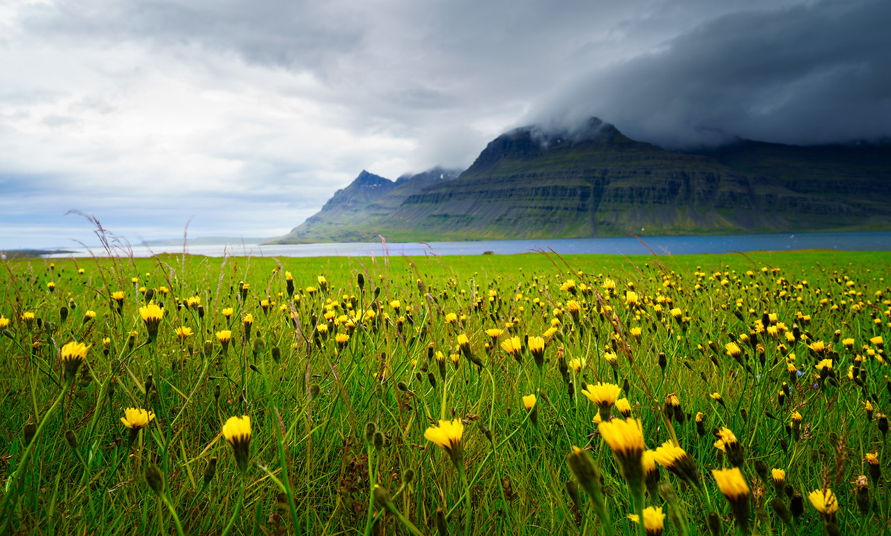 Icelandic Summers  |  South Iceland