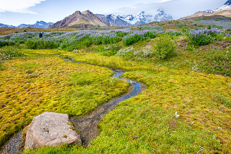Back to hotel Shaftafell and the glaciers, mountains and wildflowers