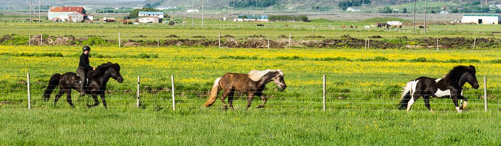 Morning horse roundup