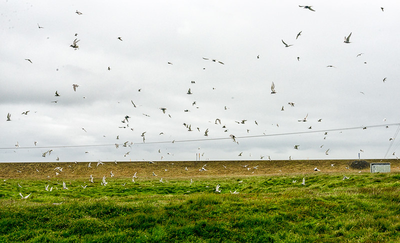 Arctic turn nesting area-wear rain gear and hat