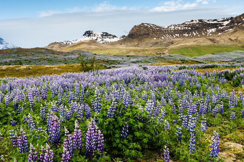 Iceland-69