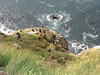 Breidavik Bird Cliffs Iceland
