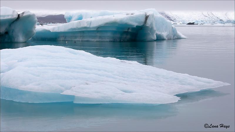 Jökulsárlón Glacier Lagoon - Icebergs and Eiders