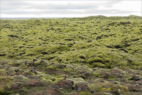 Skaftáreldahraun lava field with thick moss