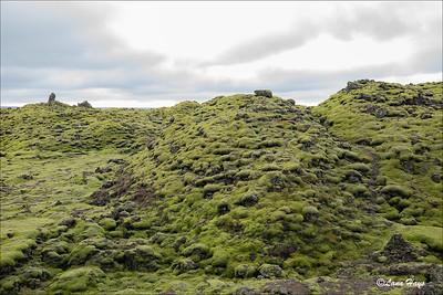Skaftáreldahraun lava field with thick moss