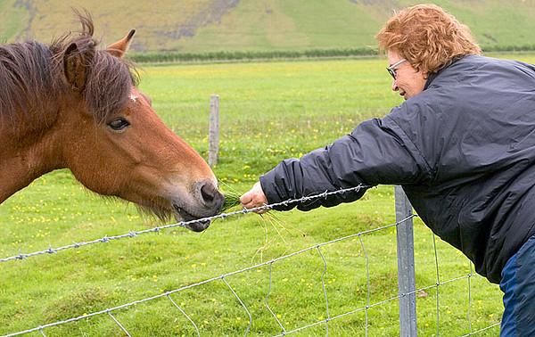 Icelandic Horse and Noella