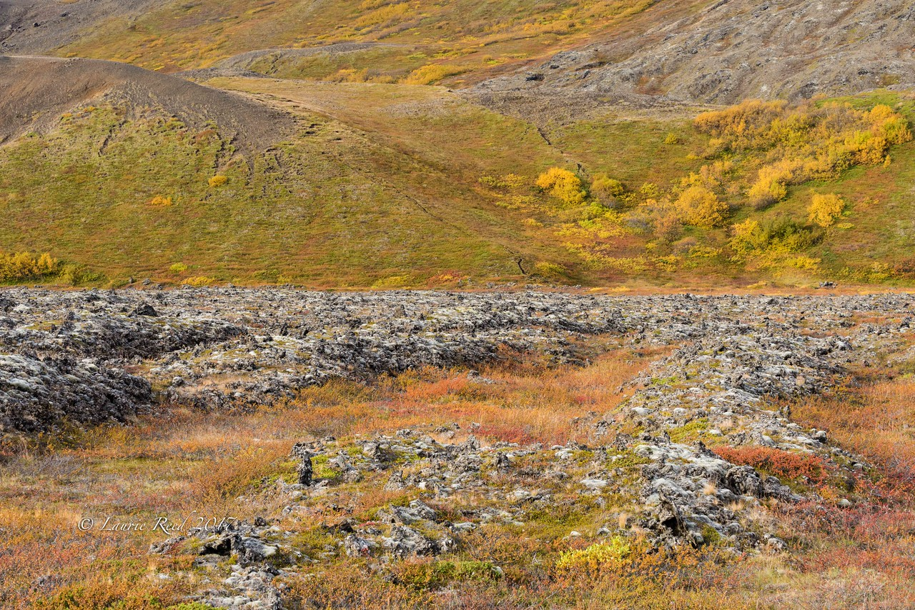 Fall color among the lava rock and hills outside Reykjahlið