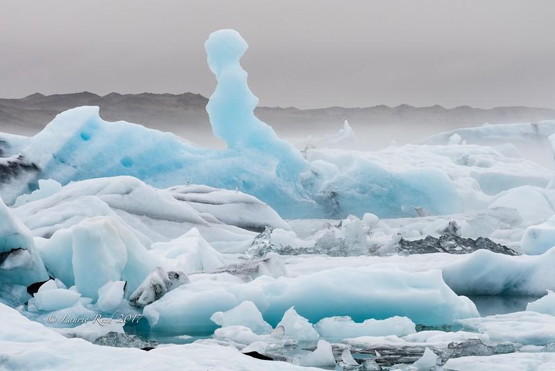 Gulls and ice in the Glacier Lagoon, Jökulsárlón