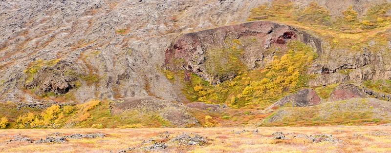 Fall colors on lava rock outside Reykjahlið