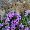 Wildflowers - Keflavik