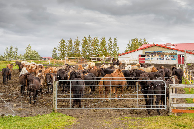Icelandic Horse Rental Center