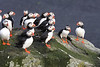 Iceland Atlantic Puffin-7