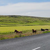 Passing horses along the deserted Highway 30 to Flúðir