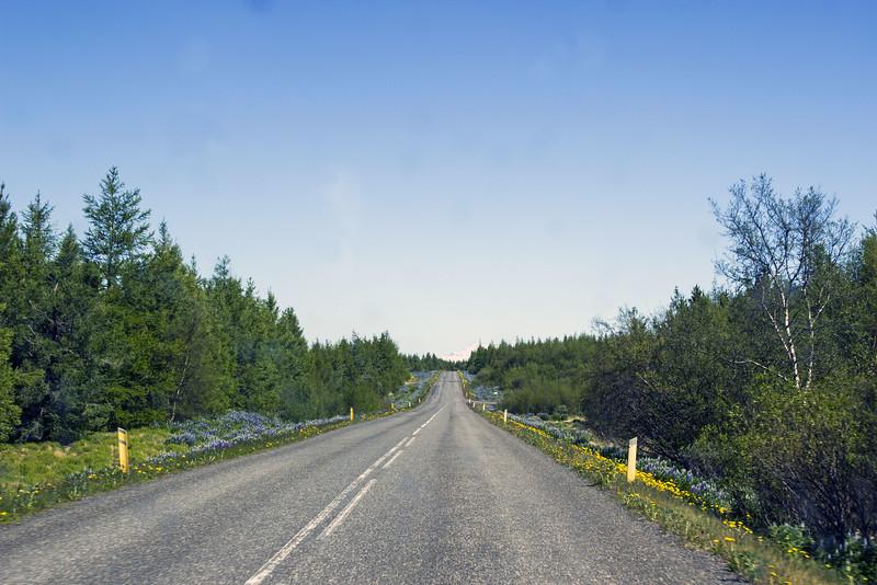 Hallormsstadhaskogur: The Biggest Forest in Iceland