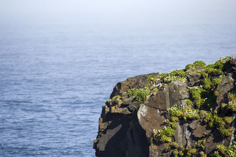 Moss covered cliffs