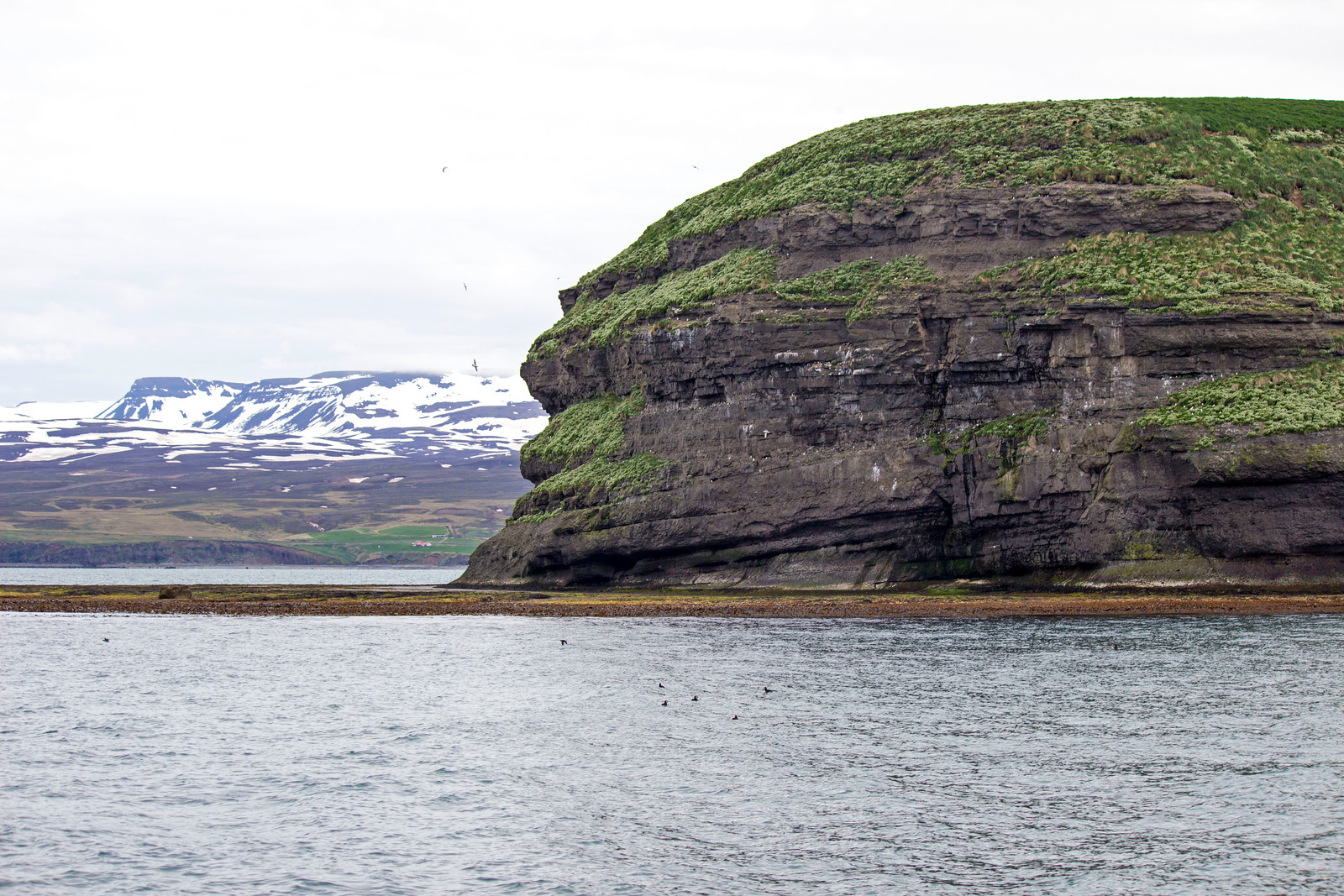 Iceland Whale Watching Tour with North Sailing Husavik