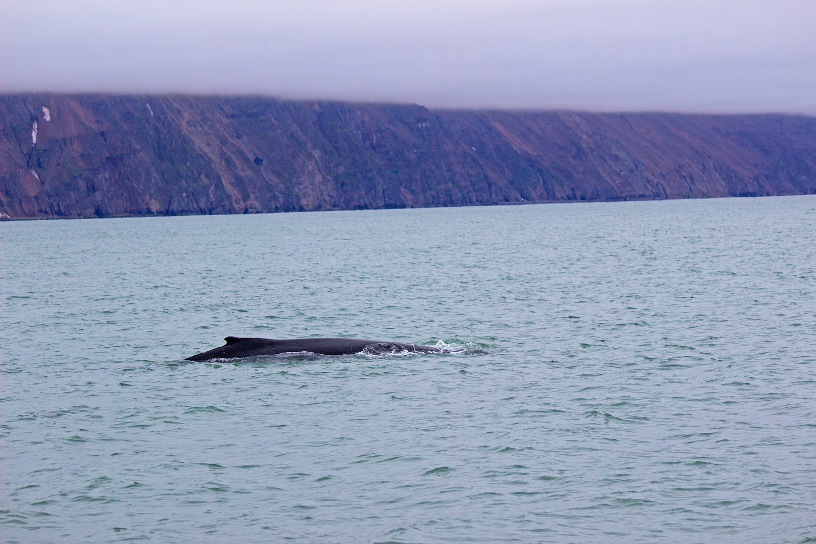 Iceland Whale Watching with North Sailing Husavik