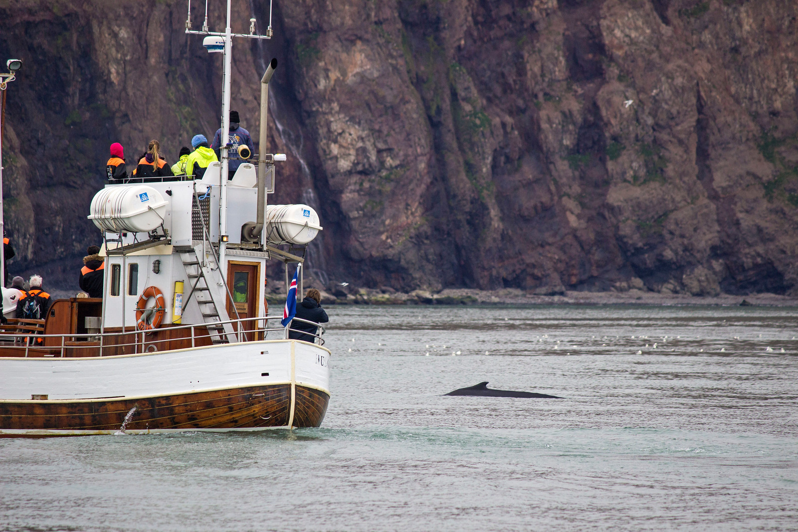 How Tourists Can Stop the Iceland Whaling Industry