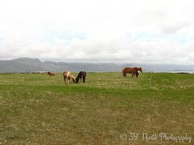 Horses at Arnarstapi