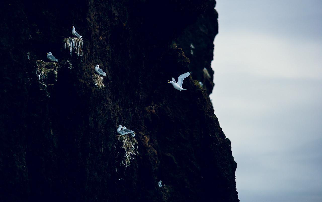 Birds & Valahnjúkur