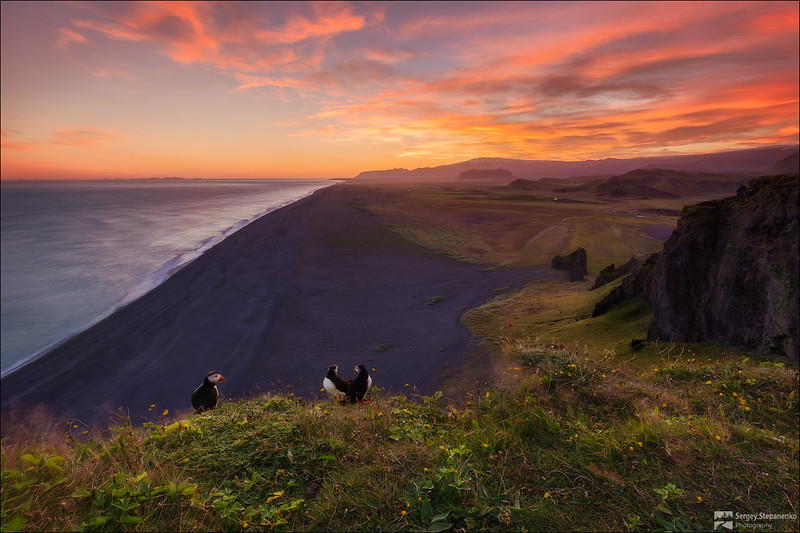Puffins sunset | Закат с тупиками