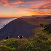 Puffins sunset