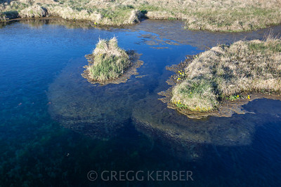 "Kattarauga (""Cat's eye""), a large, deep pool with floating islands. A protected natural feature in Vatnsdalur, North Iceland."