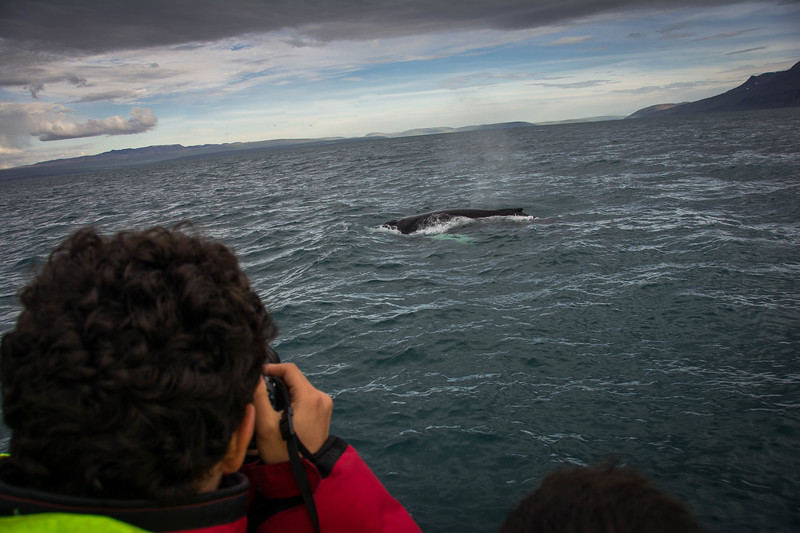 north sailing whale and puffin tour