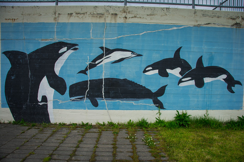 whale and puffin tour