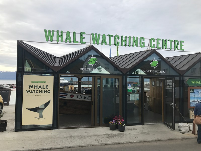 north sailing whale watching centre