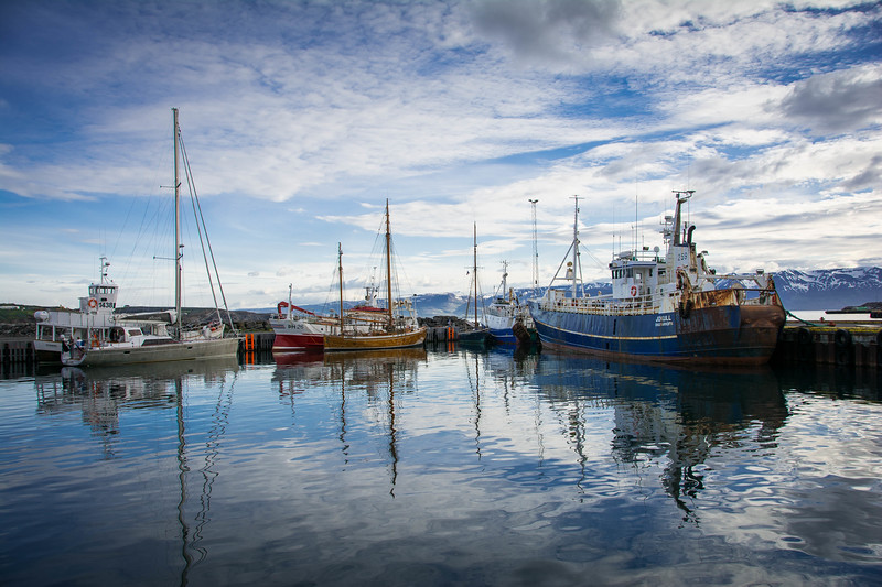 whale and puffin tour husavik