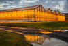 The orange glow of high pressure sodium lamps at the Fridheimar greenhouses where tomatoes are grown indoors in southern Iceland.