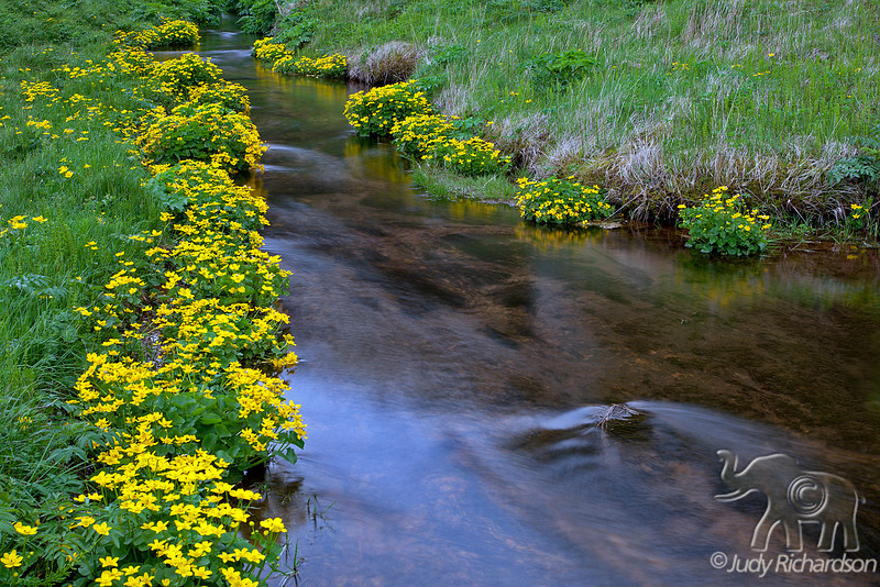 Seljalandsfoss Stream lined with wild flowers