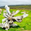 Stump on the Vatnsnes Penninsula