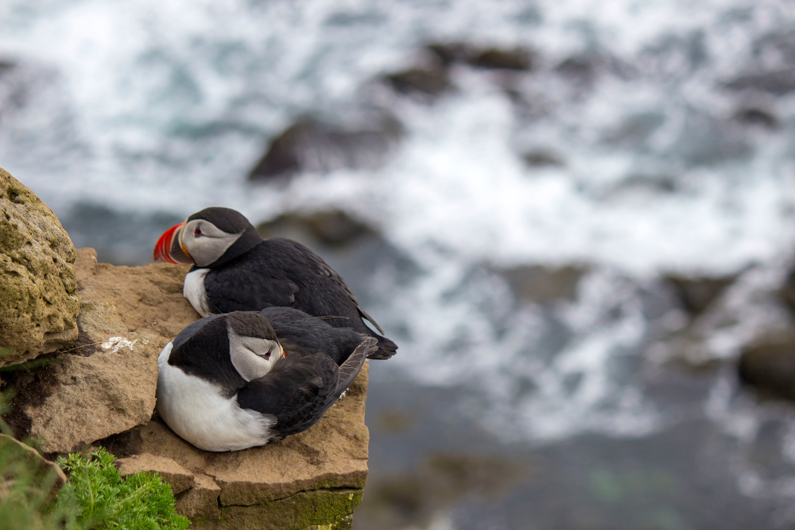 Latrabjarg Bird Cliffs: See Puffins in Iceland's Westfjords