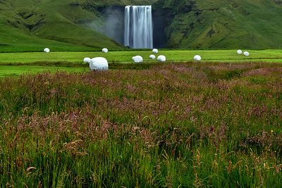 Wild flowers and Skogafoss Waterfall in background, Iceland