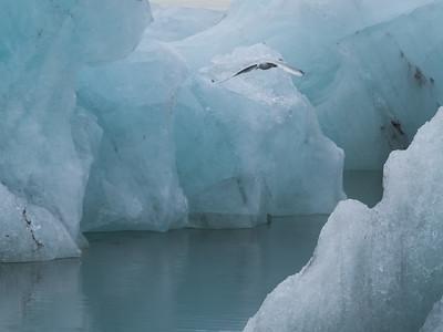 Icy Aviary - P3