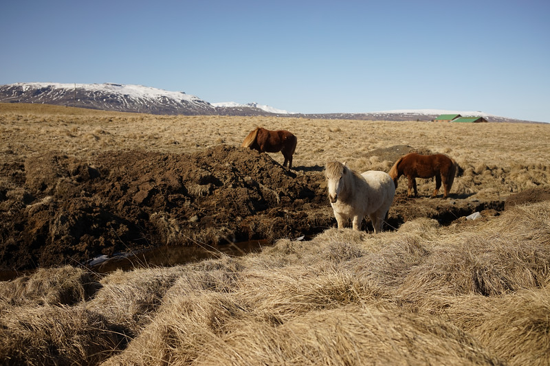 Everywhere where Icelandic Horses, unique to this region. They are more pony-sized.